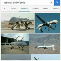 Memes, News, and Videos: national bird of syria  ALL NEWS  IMAGES  VIDEOS  MAPS  SHOPPI Very common😂 Von @aldi.akbar_