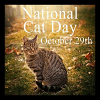 "National  Cat Day  October 20th Happy National Cat Day !!!  National Cat Day was founded by Jason Merrill. It is a celebration that takes place on October 29th, every year in the United States. The holiday was first celebrated in 2005 ""to help galvanize the public to recognize the number of cats that need to be rescued each year and also to encourage cat lovers to celebrate the cat(s) in their life for the unconditional love and companionship they bestow upon us."""