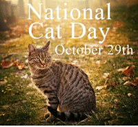 National  Cat Day  October 20th Just a reminder for all of Tommy's wonderful friends tomorrow is National Cat day! Although we celebrate everyday its marvelous to have a special day to recognize all the beautiful and precious babies in the world. Have a fabulous day with your loving babies.   Happy National Cat Day! October 29th  Caturday  Love, Tommy's celebrating babies...<3  I would welcome all of Tommy's friends to share and show off your beautiful babies. It would bring much needed joy and happiness to my soul. Thank you!  Google