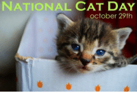 national cat day: NATIONAL CAT DAY  october 29th