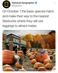 The basic male species know a female is fertile when she starts giving off pumpkin spice scents. october fall: National Geographic  @NatGeo  On October 1 the basic species hatch  and make their way to the nearest  Starbucks where they will use  leggings to attract mates  STARBUCKS The basic male species know a female is fertile when she starts giving off pumpkin spice scents. october fall