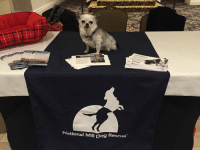 Memes, 🤖, and Education: National Mill Dog Rescue Here I am educating people about National Mill Dog Rescue at the Pikes Peak Chapter of the Women's Council of REALTORS®!
