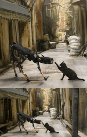 Target, Tumblr, and Blog: native-voyage: niconavarro: Woops! Who are you? Robot cat meets real cat