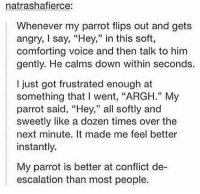 "Memes, Voice, and Angry: natrashafierce:  Whenever my parrot flips out and gets  angry, say, ""Hey,"" in this soft,  comforting voice and then talk to him  gently. He calms down within seconds.  I just got frustrated enough at  something that I went, ""ARGH."" My  parrot said, ""Hey,"" all softly and  sweetly like a dozen times over the  next minute. It made me feel better  instantly.  My parrot is better at conflict de-  escalation than most people. tag a friend!"