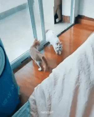 """Food, Target, and Tumblr: natsdorf impling: thenatsdorf: Cat brings her kittens to human's bed as sign of trust. """"is WARM here. is SOFT. is SAFE. Large friend who brings food spends many hours here. is BEST place for babies."""""""