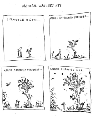 Love, Birds, and The Birds: NATURAL WANDERS #58  l PLANTED A SEED.  WHICHATTRACTED THE BEES.  WHICH ATTRACTED THE BIRDS  WHICH ATTRACTE D HER Ecology of Love (OC)
