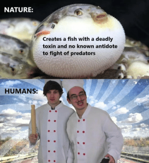 Antidote, Dank, and Food: NATURE:  Creates a fish with a deadly  toxin and no known antidote  to fight of predators  HUMANS:  :: Delicious, finally some good fucking food by Sandor_Bunda MORE MEMES