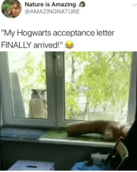 "Af, Cute, and Memes: Nature is Amazing  @AMAZINGNATURE  ""My Hogwarts acceptance letter  FINALLY arrived!"" Cute AF"
