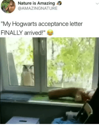 "Memes, Nature, and Amazing: Nature is Amazing  @AMAZINGNATURE  My Hogwarts acceptance letter  FINALLY arrived!"" I hope she got in"