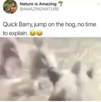 Memes, Nature, and Time: Nature is Amazing  @AMAZINGNATURE  Quick Barry, jump on the hog, no time  to explain. 부부 I have so many questions... 🧐🧐😂