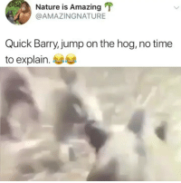Memes, Nature, and Time: Nature is Amazing  @AMAZINGNATURE  Quick Barry,jump on the hog, no time  to explain.e I'm 💀