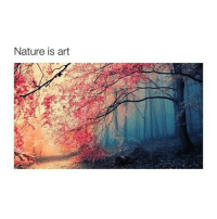 Memes, Nature, and Been: Nature is art A firework only does its job after it has been fired