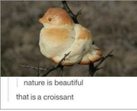 Beautiful, Memes, and Nature: nature is beautiful  that is a croissant The most beautiful bird via /r/memes https://ift.tt/2E14thE