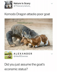 Goat, Nature, and Dank Memes: Nature Is Scary  @Thescarynature_  Komodo Dragon attacks poor goat  ALEXANDER  @AlexRDownes  Did you just assume the goat's  economic status? How dare you
