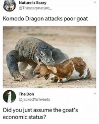 Goat, Nature, and Okay: Nature Is Scary  @Thescarynature  Komodo Dragon attacks poor goat  The Don  @JackedYoTweets  Did you just assume the goat's  economic status? Not okay, never assume