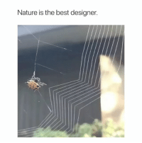 Work, Best, and Nature: Nature is the best designer. Imagine u do all this work for some jackass to walk into it