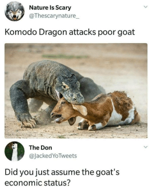 Dank, Memes, and Target: Nature ls Scary  @Thescarynature_  Komodo Dragon attacks poor goat  The Don  @JackedYoTweets  Did you just assume the goat's  economic status? meirl by thelonesomedemon1 MORE MEMES