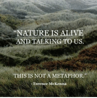 "Alive, Metaphor, and Terence: ""NATUREIS ALIVE  AND TALKING TO US.  (C  THIS IS NOT A METAPHOR  Terence McKenna"