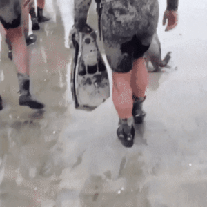 Navy Seals got a good laugh when an actual seal decided they wanted to do training with them!: Navy Seals got a good laugh when an actual seal decided they wanted to do training with them!