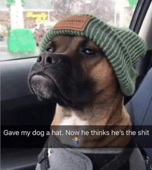 big snoop dog by drengeroevfewrik MORE MEMES: NAWAY  Gave my dog a hat. Now he thinks he's the shit big snoop dog by drengeroevfewrik MORE MEMES