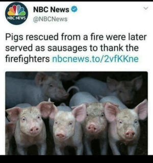 ni🅱🅱as thought they safe now by tacticalinfernape MORE MEMES: NBC News  NBC NEWS  @NBCNews  Pigs rescued from a fire were later  served as sausages to thank the  firefighters nbcnews.to/2vfKKne ni🅱🅱as thought they safe now by tacticalinfernape MORE MEMES