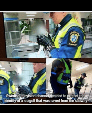 swedish police doing gods work: NDA  CANONINE  VAKT  OR  Swedish television channel decided to protect the  identity of a seagull that was saved from the subway swedish police doing gods work
