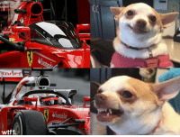 Halo, Memes, and F1: nder  ant  wtf1 The shield was so much better f1 formula1 halo wtf1