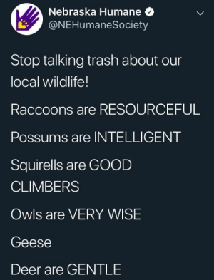 Wildlife: Nebraska Humane  @NEHumaneSociety  Stop talking trash about our  local wildlife!  Raccoons are RESOURCEFUL  Possums are INTELLIGENT  Squirells are GOOD  CLIMBERS  Owls are VERY WISE  Geese  Deer are GENTLE