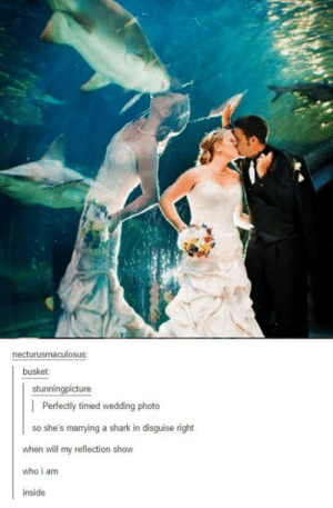 Shark, Wedding, and Who: necturusmaculosus  busket  stunningpicture  | Perfectly timed wedding photo  so she's marrying a shark in disguise right  when will my reflection show  who i am  inside Happily married