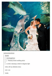 Wedding: necturusmaculosus  busket  stunningpicture  Perfectly timed wedding photo  so she's marrying a shark in disguise right  when will my reflection show  who i am  inside