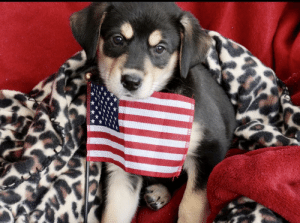 Need a break from political hate please. Angel was saved by US Airmen and Puppy Rescue Mission.: Need a break from political hate please. Angel was saved by US Airmen and Puppy Rescue Mission.