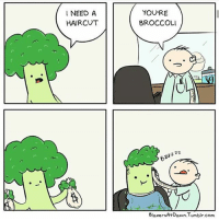 Haircut, Memes, and Tumblr: NEED A  HAIRCUT  YOU'RE  BROCCOLI  2  Blazers At Dawn. Tumblr.com