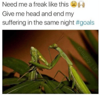 Head, Dank Memes, and Suffering: Need me a freak like this  Give me head and end my  suffering in the same night