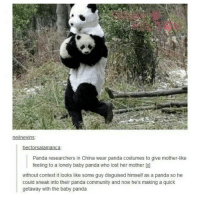 Memes, Baby Panda, and 🤖: nei nevins  hectorsalamanca:  Panda researchers in China wear panda costumes to give mother-like  feeling to a lonely baby panda who lost her mother  without context it looks like some guy disguised himself as a panda so he  could sneak into their panda community and now he's making a quick  getaway with the baby panda