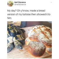 y'know 🥖🐢 (via @neilslorance): Neil Slorance  @neilslorance  My day? Oh y'know, made a bread  version of my tortoise then showed it to  him y'know 🥖🐢 (via @neilslorance)