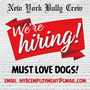 Dogs, Food, and Love: Neir Work Bully Crein  Were  hiring!  MUST LOVE DOGS!  EMAIL NYBCEMPLOYMENT@GMAIL.COM NYBC IS HIRING! NOW! Patchogue facility location 🚨There are positions available for ambitious, compassionate, animal advocates: We need: • Dog Handler- must have experience with large breeds.  • Morning Cleaner- must love dog stuff • Daytime Laborer- random tasks include: cleaning, dog walking, vet runs, food pick-up, etc.  Please send resume or inquire at NYBCemployment@gmail.com  #nybcjobs #savepits #fightabusenotdogs #thecrew #nybcmafia
