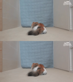neko-gifs:  neko-gifs: A compilation of ChuChu running away : neko-gifs:  neko-gifs: A compilation of ChuChu running away