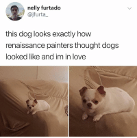 Dogs, Love, and Memes: nelly furtado  @jfurta_  this dog looks exactly how  renaissance painters thought dogs  looked like and im in love I love this dog
