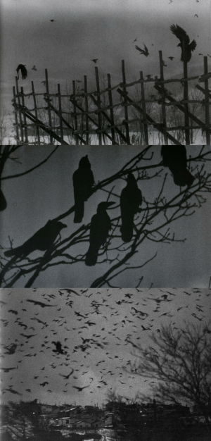 nemophilies:Masahisa Fukase, The Solitude of Ravens : nemophilies:Masahisa Fukase, The Solitude of Ravens