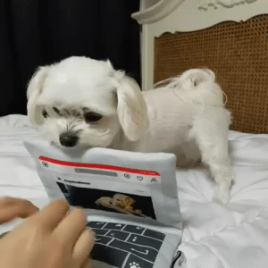 nenafichu: jupitersaurus:  stappls:  So pure  THE FASTEST TYPIST IN THE WORLD IS A DOG   200 WPM : nenafichu: jupitersaurus:  stappls:  So pure  THE FASTEST TYPIST IN THE WORLD IS A DOG   200 WPM