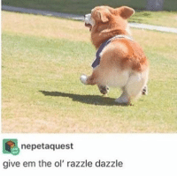 can't wait to watch Die Hard tonight🙌🏻: nepet aquest  give em the ol' razzle dazzle can't wait to watch Die Hard tonight🙌🏻