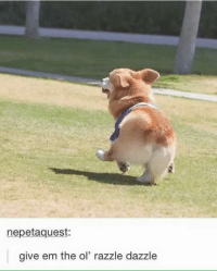 Give Em The Ol Razzle Dazzle: nepetaquest:  give em the ol' razzle dazzle