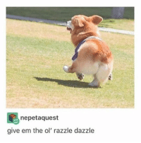 dat booty: nepetaquest  give em the ol' razzle dazzle dat booty