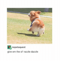 LOOK @ ITS PRECIOUS FLUFFY BUTT AND IT STICKING ITS LEGY OUT REALLY FAR IM SO HAPPY - Max textpost textposts: nepetaquest  give em the ol' razzle dazzle LOOK @ ITS PRECIOUS FLUFFY BUTT AND IT STICKING ITS LEGY OUT REALLY FAR IM SO HAPPY - Max textpost textposts