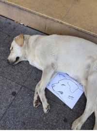 """Tumblr, Blog, and Http: ners. 7.3) <p><a href=""""http://posts-that-only-suck-a-little.tumblr.com/post/156637765092/someone-drew-a-portrait-of-this-sleeping-dog-and"""" class=""""tumblr_blog"""">posts-that-only-suck-a-little</a>:</p> <blockquote><p>someone drew a portrait of this sleeping dog and gave it to him. amazing.</p></blockquote>"""