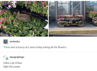 """Flowers, Lowes, and Power: neshasha  There was a bunny at Lowes today eating all the flowers  topographygo  haha u go lil bun  fight the power <p>Fight the Flowers that Be! via /r/wholesomememes <a href=""""https://ift.tt/2rnr1Bj"""">https://ift.tt/2rnr1Bj</a></p>"""