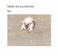20 Funny Photos for Your Monday #funny #memes: Netflix: Are you still there  Me: 20 Funny Photos for Your Monday #funny #memes