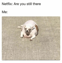 Netflix, You, and Still: Netflix: Are you still there  Me: