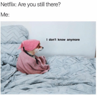 Dank, Netflix, and 🤖: Netflix: Are you still there?  Me:  I don't know anymore  IG: Quincýfo