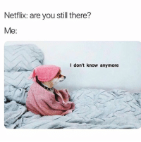 Memes, Netflix, and Nope: Netflix: are you still there?  Me:  I don't know anymore nope